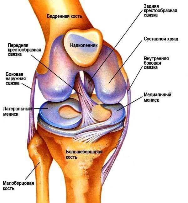 на фото коленный сустав