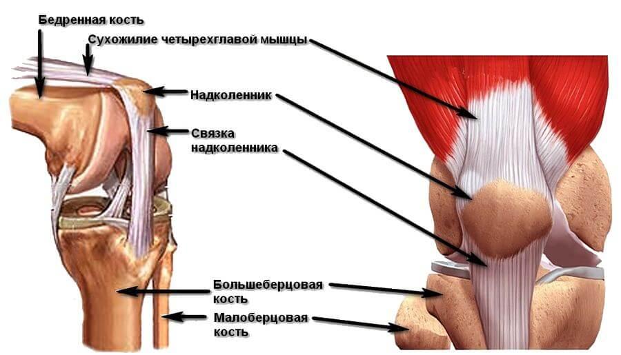 схема ноги