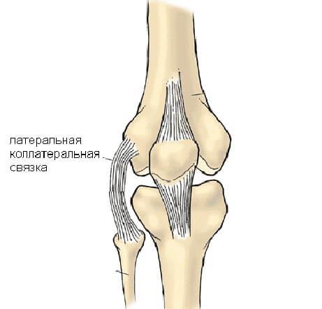 связка колена