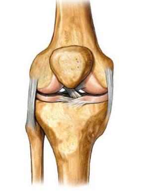 на фото строение коленного сустава