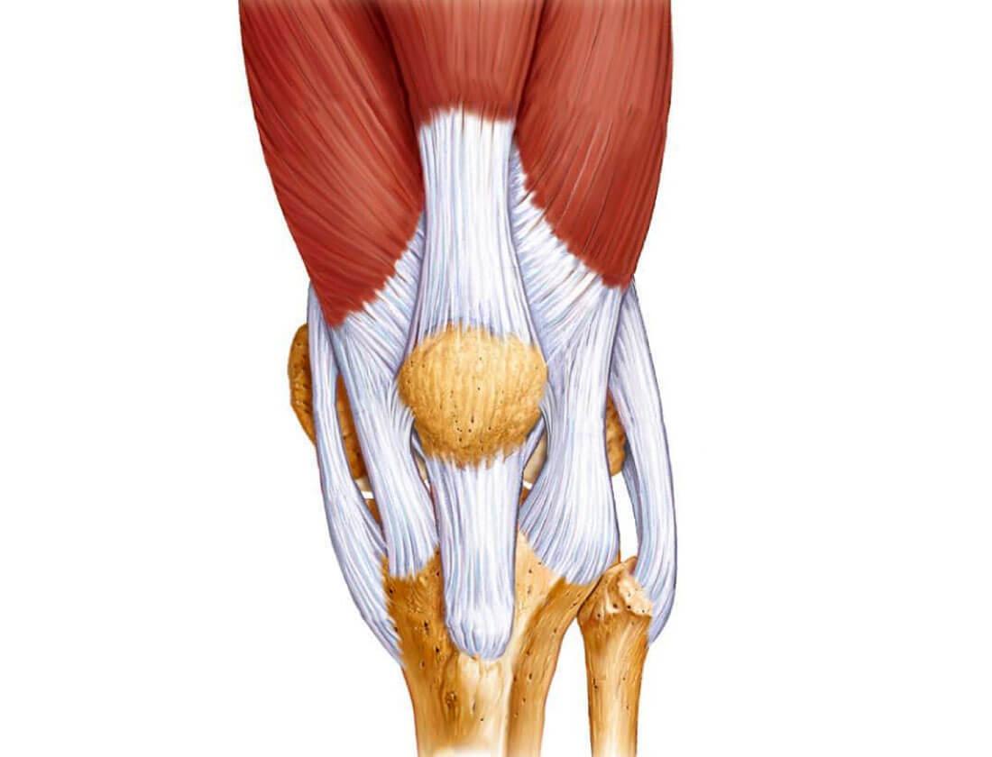 легаментоз колена