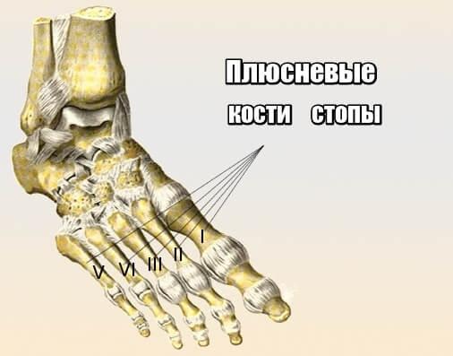 плюсневые кости стопы