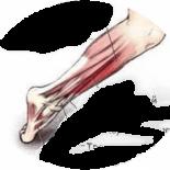3 вида травм голени и стопы